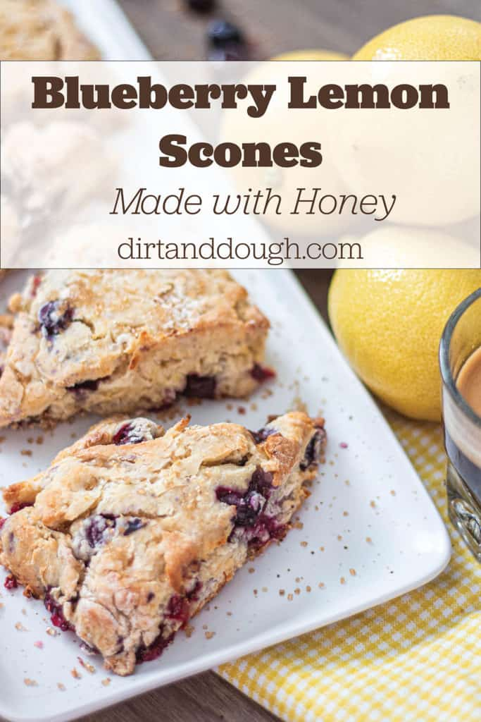 Fresh homemade blueberry Lemon scones